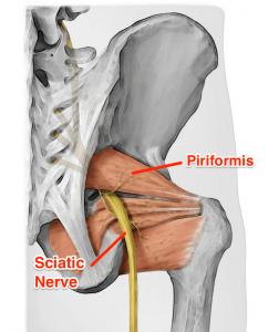 Piriformis-anatomy